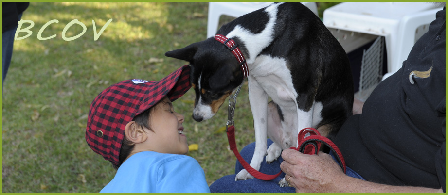 Basenjis love children